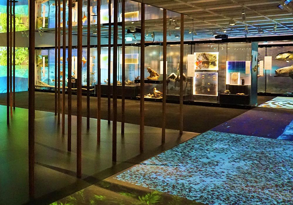 Queensland_Museum